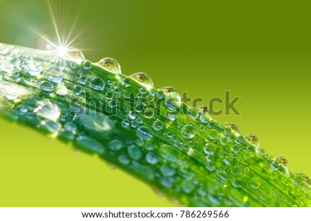 Droplets of water sparkle in the sunlight on a blade of grass in nature in spring in close-up. Grass in the morning dew macro, free space for text.