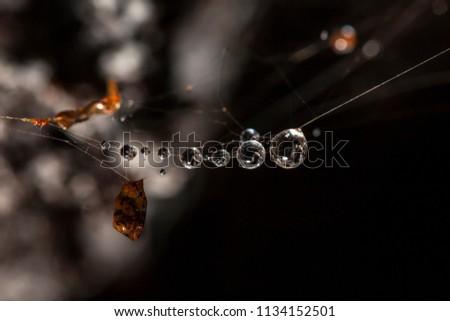 Droplets on a cobweb