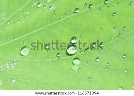 droplets water on beautiful green leaf