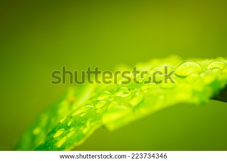 droplets water on green leaf