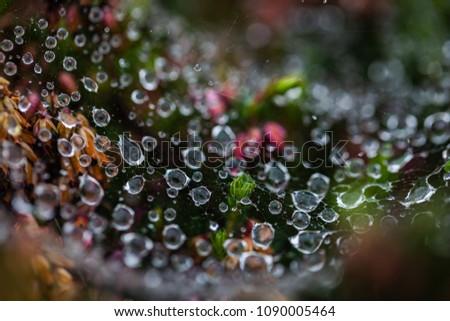 Drops of dew on a cobweb.