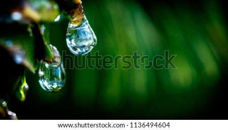 Drops of dew on the beautiful green grass, background close up