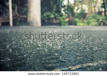 Drops of heavy rain in the tropical jungles