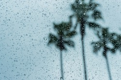 Drops of rain on the window; blurred palm trees in the background; shallow depth of field