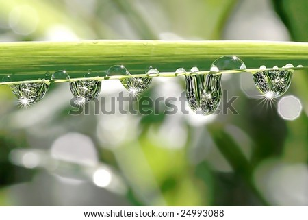 Drops of water hanging from the blade of grass in the early morning.
