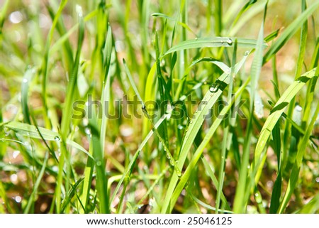 drops of water in the grass
