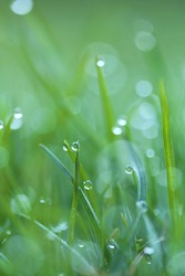 Drops of water macro on green grass. Green grass close-up. Spring fresh grass with raindrops. Wet grass texture