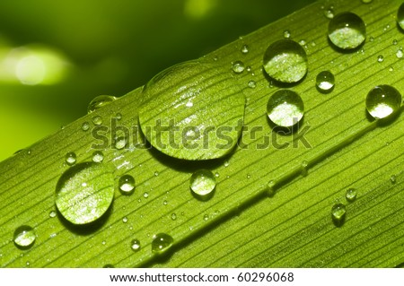 drops of water on a green leaf