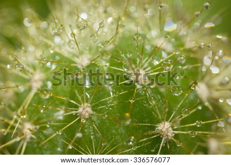 drops of water on cactus needles background