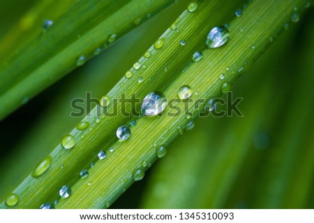 Drops of water on the grass, after a summer rain moisture condensed from the atmosphere that falls visibly in separate drops. #1345310093