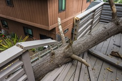 Drought causes dead pine tree to fall on house, on the Big Sur coastline, California Central Coast, near Cambria, CA.