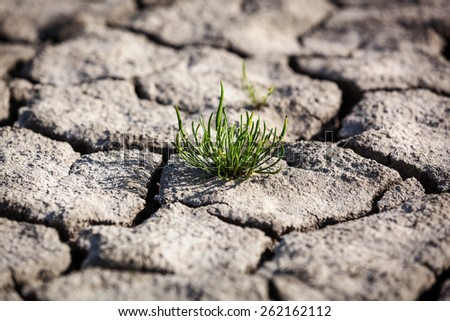 Drought, dry earth, crack, sun, peace, sadness, dried up water, a crack in the ground, dying without water, dry riverbed, dry river dry lake land