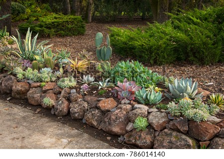 Drought resistant gardening using succulents, with rock border