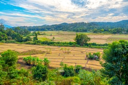 drought season, dry old rice field with dirt in summer day, thailand. young rice field with mountain background and beautiful blue sky. View from top of the mountain dried rice field