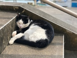 Drowsy harlequin cat sleeping on concrete stair step. Lazy cat. Catnap time.