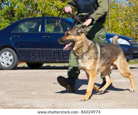 Drug sniffing dog and his uniformed police officer handler preparing to investigate a crime scene.   I have a very similar image in my portfolio which has a police cruiser in it.