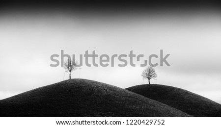 Drumlins with Tree