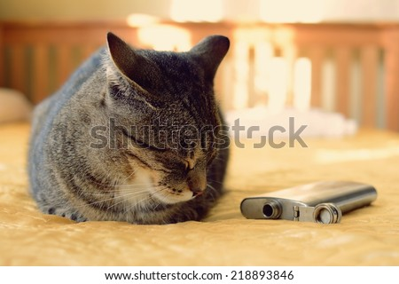 Drunk cat lying on a bed with a flask