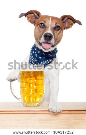 drunk dog with beer - stock photo