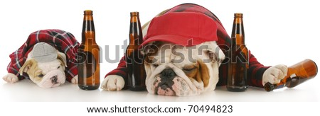 drunk dogs - english bulldog father and son with beer bottles