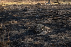 Dry and black grass and branches after fire. Dry tree branches everywhere. Green and yellow grass waterlands somewhere. Blurred background