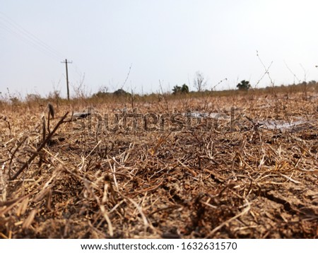 dry area  and dry soil and dry plants