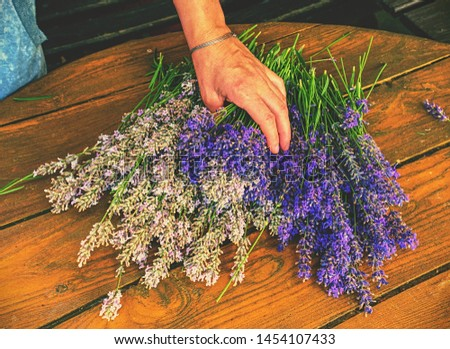 Dry aromatic lavender bunch. Bunches of medicinal herbs. Herbal medicine #1454107433