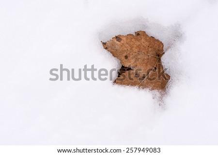 Dry autum leaf on the snow. \ Dry leaf.