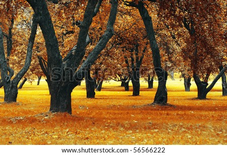 Dry autumn grass and apple trees in city park