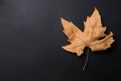 Dry autumn leaf on black background, top view. Space for text
