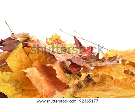 dry autumn leaves isolated on white