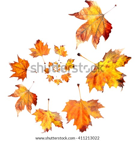 Dry autumn leaves spiral isolated on white #411213022