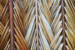 Dry bamboo leaf line asian background outdoor