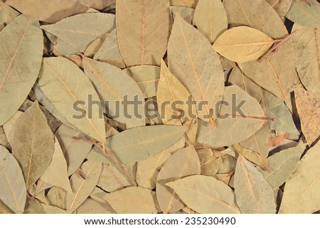 Dry bay laurel leaves as background texture