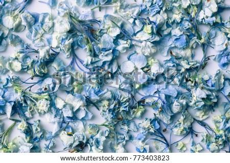 Dry Blue Hydrangea flower background