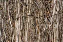 Dry branch fence. Beautiful rustic closeup. Wood texture, abstract wooden background. Background texture old.