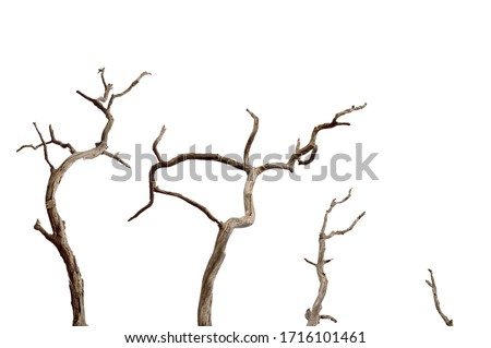 Dry branch of dead tree with cracked dark bark.beautiful dry branch of tree isolated on white background.Set of dead tree.Dry wooden stick from the forest isolated on white background . Foto stock ©