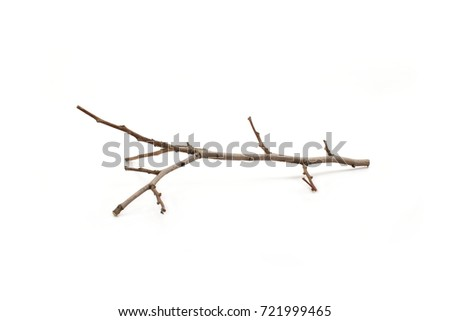 Dry branches on white wood. #721999465