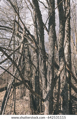 dry broken tree branches on the ground in spring forest. textured - vintage retro look #642531115