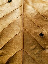 dry brown autumn leaf texture