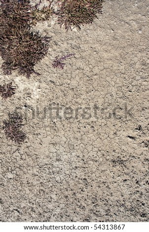 Dry brown ground surface with some small plants growing in the top left corner of the frame