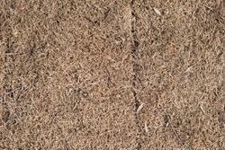 Dry brown lifeless grass texture background. Close-up