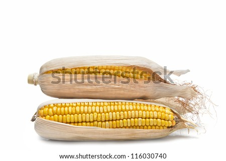 Dry corn ears isolated over a white background