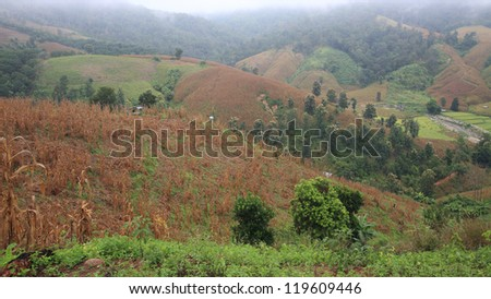 Dry Corn farm with wooden cabin on the hill at Mae Chaem district in Chiang Mai, Thailand #119609446