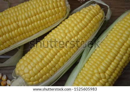 dry corns, fresh corns and corn grains on the wooden table