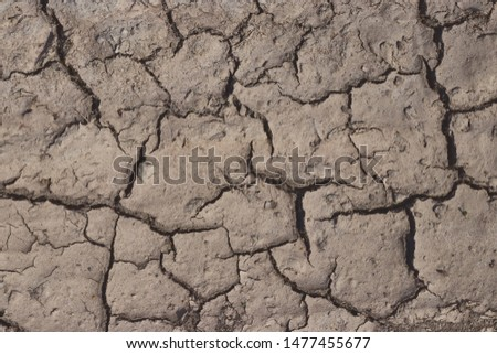 Dry cracked earth. cracked earth texture for design. textured background. #1477455677