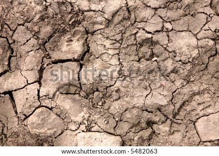 Dry cracked mud texture background.