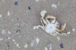 Dry dead crab on the beach.