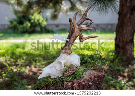 Dry deer antlers attached to the skull on a tree trunk #1575202213