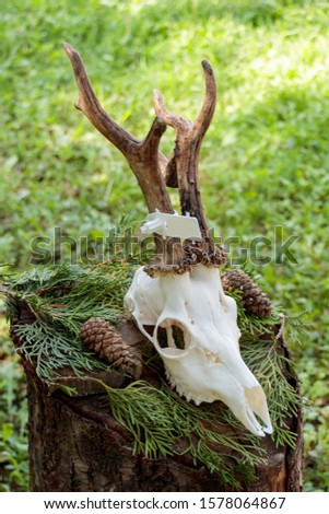 Dry deer antlers attached to the skull on a tree trunk #1578064867